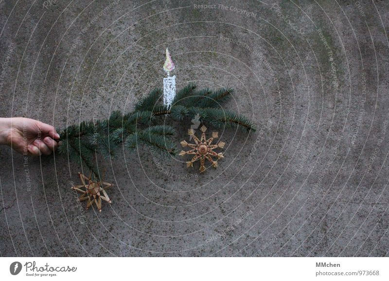Christmas & Advent Green Hand Calm Wall (building) Emotions Wall (barrier) Gray Feasts & Celebrations Glittering Illuminate Decoration Branch Concrete