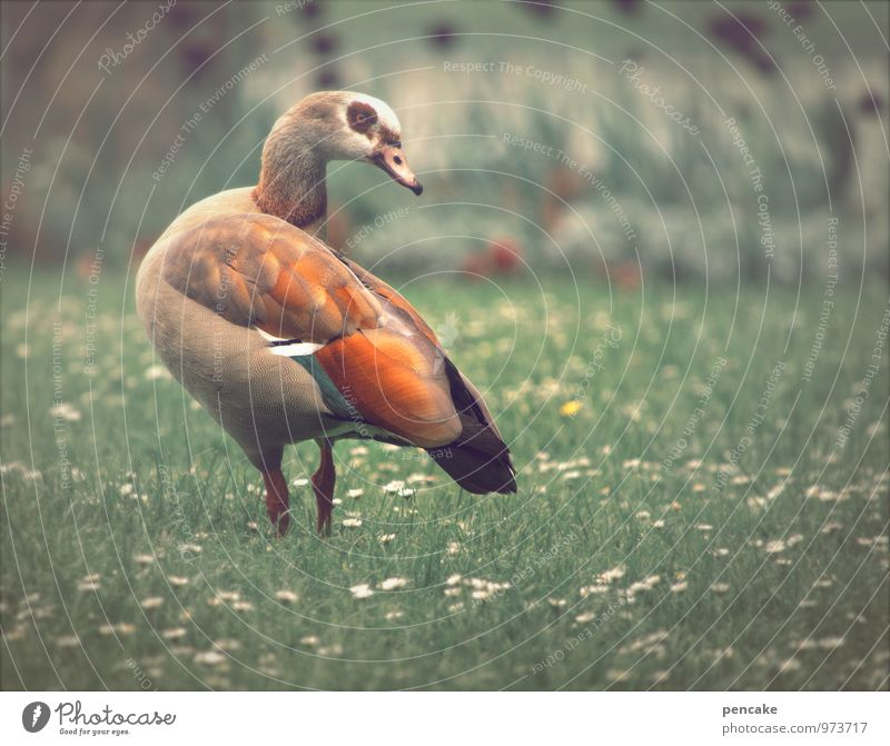 Nature Animal Meadow Spring Bird Park Esthetic Beautiful weather Eyeglasses Elements Exotic Duck Daisy Goose