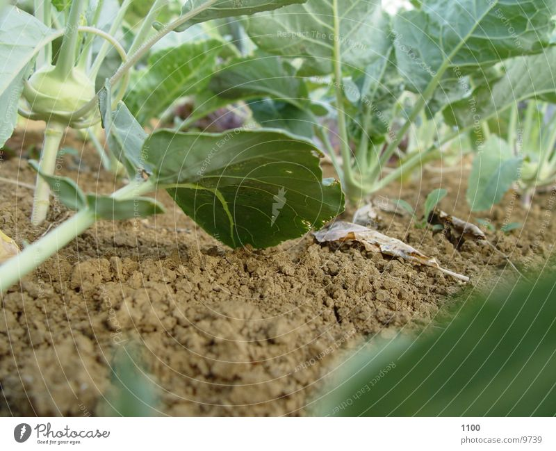 Green Leaf Garden Earth Floor covering Under Vegetable