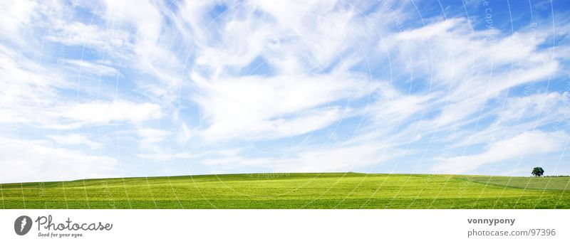 Nature Sky White Tree Green Blue Summer Clouds Loneliness Far-off places Meadow Spring Landscape Wind Horizon Infinity