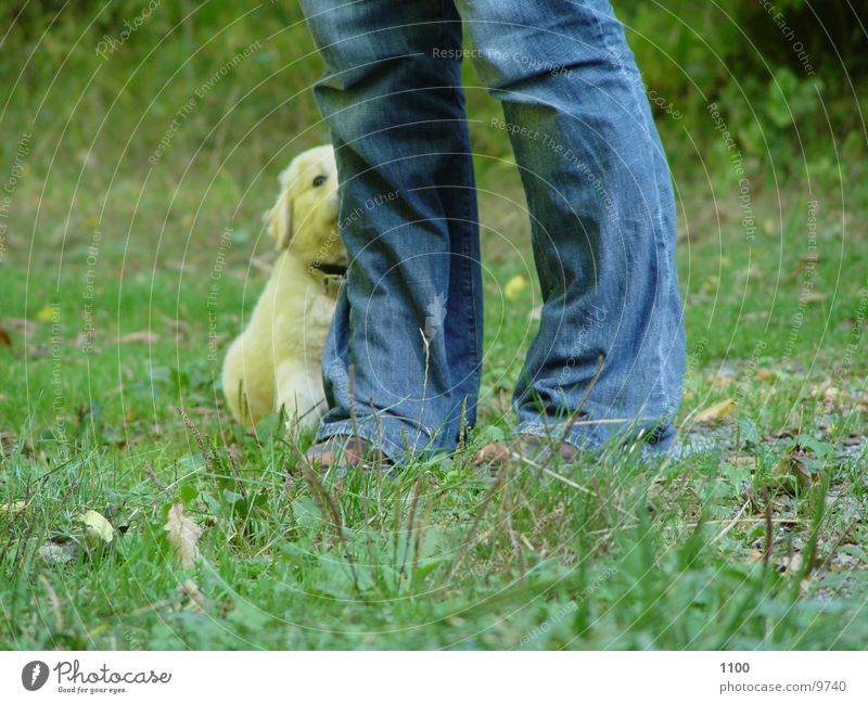 Green Meadow Grass Dog Feet Legs Puppy