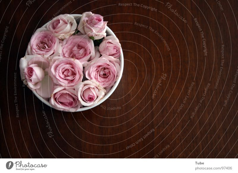 Pink Impressions Wood Brown Table Rose Green White Red Blossom Airy Easy Heap Stripe Flower Still Life Composing Dark Comforting Heavy Wood flour Sympathy