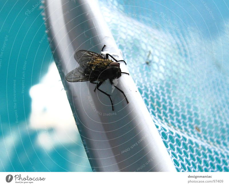 White Black Eyes Mountain Small Legs Waves Large Wait Fly Wing String Swimming pool Climbing Net Insect