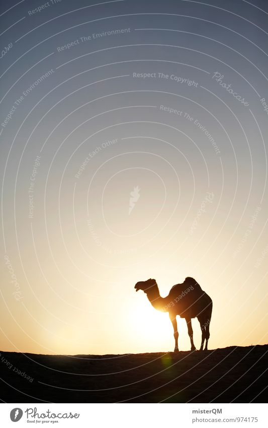 Desert Cab I Art Esthetic Contentment Camel Camel hump Head of a camel Warmth Mirage Sunset Sunlight Sunbeam Sunbathing Dry Loneliness Sahara Animal Exotic