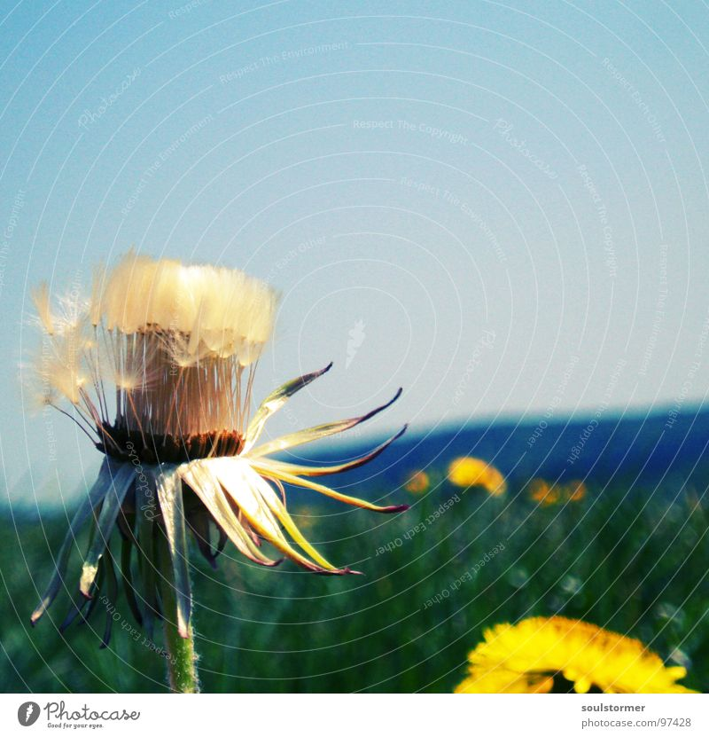Sky Sun Flower Far-off places Lamp Meadow Mountain Spring Freedom Flying Horizon Infinity Dandelion Seed