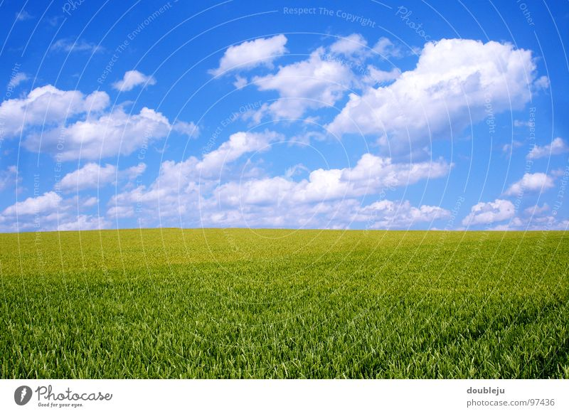 Sky Green Blue Summer Clouds Colour Landscape Field Grain Barley