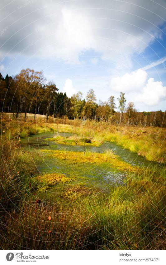 raised bog Nature Landscape Plant Elements Water Sky Clouds Summer Autumn Grass Forest Bog Marsh Pond Natural Wild Loneliness Idyll Nature reserve Fen