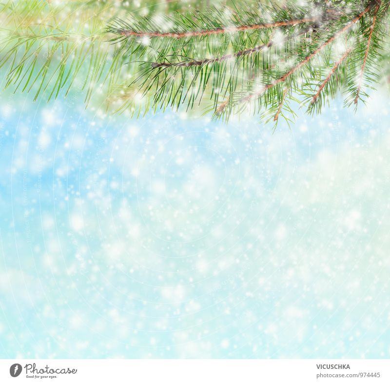 Sky Nature Christmas & Advent Winter Snow Style Background picture Snowfall Ice Design Frost Twig Fir tree Hail