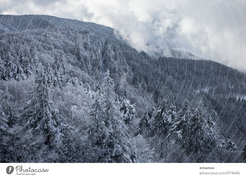 Sky Nature Vacation & Travel Plant White Tree Landscape Clouds Winter Forest Cold Environment Mountain Snow Snowfall Air