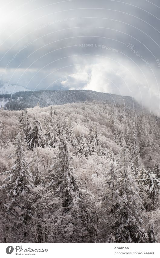 Sky Nature Vacation & Travel Plant White Tree Landscape Clouds Far-off places Winter Forest Cold Environment Mountain Snow Snowfall