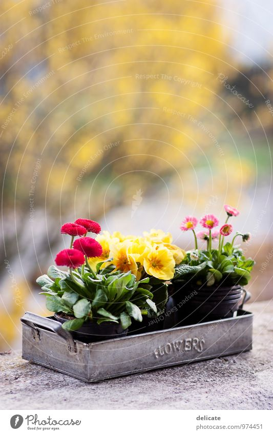 Flowers II Nature Plant Animal Bushes Blossom Spring flower Bud Daisy Violet Blossoming Garden Flower power Tin Red Yellow Forsythia blossom Blur Isolated Image