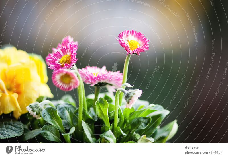 Flowers III Nature Plant Animal Leaf Blossom Garden Blossoming Growth Fragrance Beautiful Multicoloured Yellow Green Pink White Daisy Violet Isolated Image Blur
