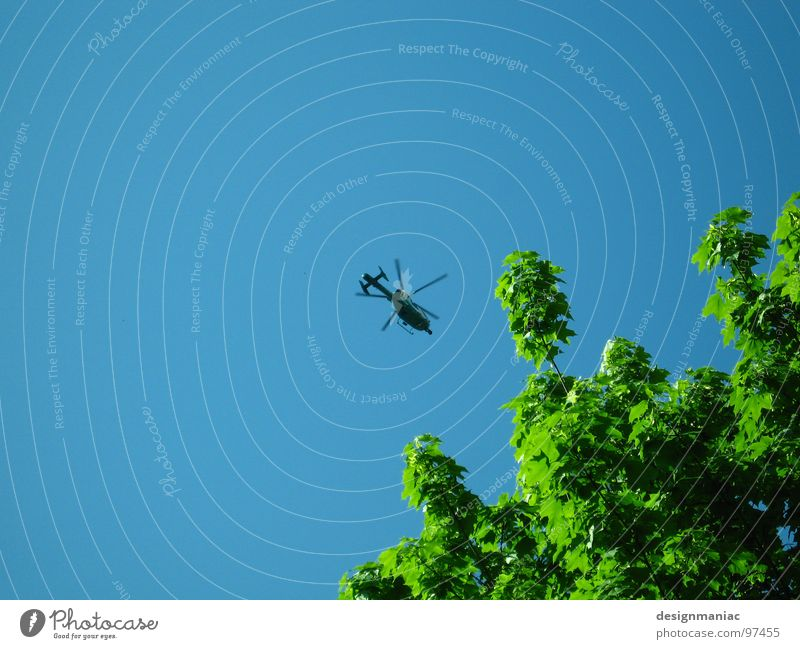 Sky Blue Green Tree Leaf Black Above Small Wait Tall Large Free Airplane Industry Clarity Middle