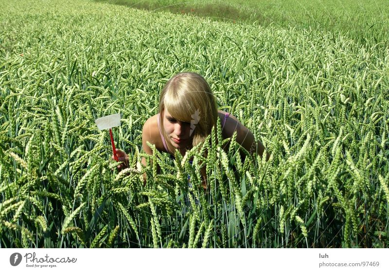 Come out! Field Animal Insect Threaten Where Green Wheat Large Multicoloured Rotate Near Swing Woman Far-off places Youth (Young adults) swatter Death Search