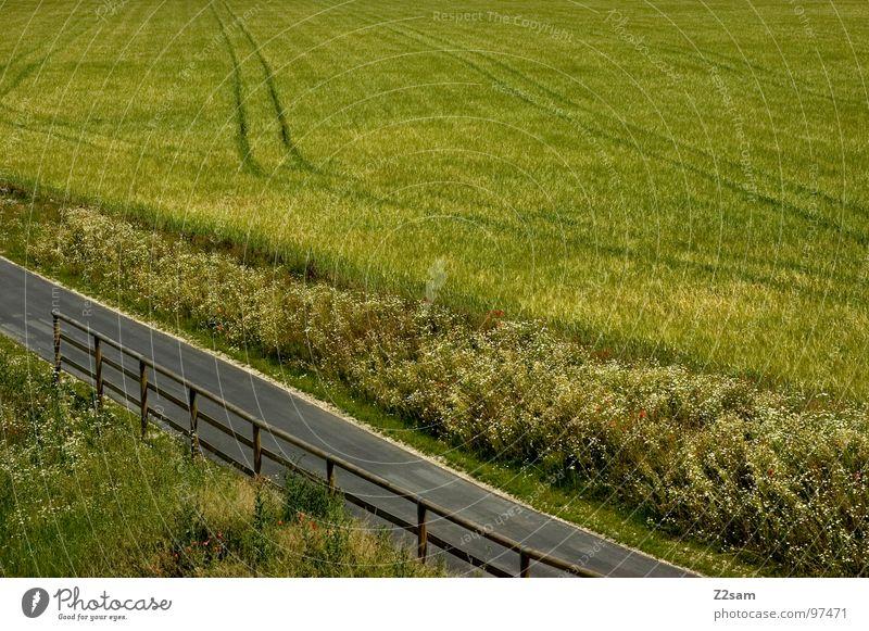Nature Green Summer Street Grass Wood Lanes & trails Line Field Concrete Harvest Footpath Tree trunk Grain Handrail Tar