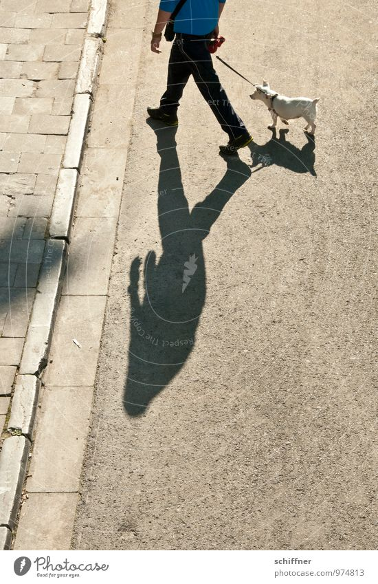 Dog Human being Man Animal Adults Street Going Masculine To go for a walk Sidewalk Pet Pavement Dog lead Curbside Shadow play Obedient