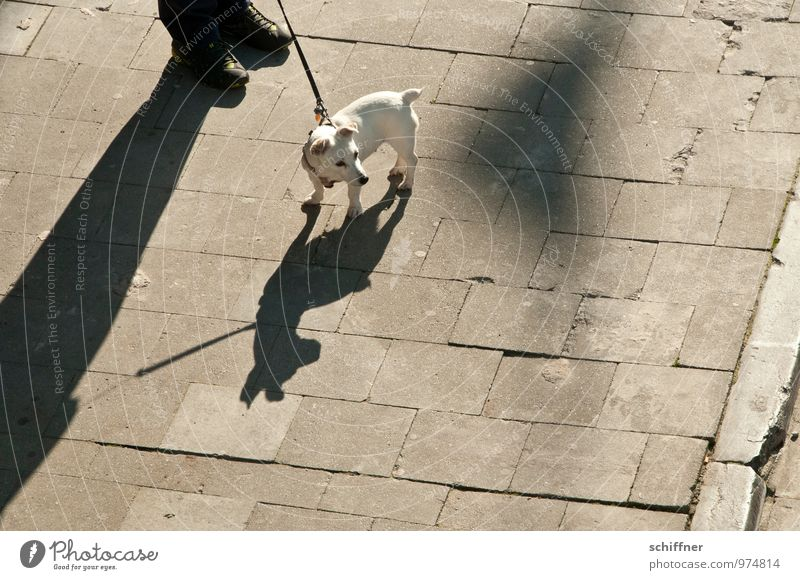 Belgian Pittbull Human being Feet 1 Animal Pet Dog Small Shadow Shadow play Shadowy existence Silhouette Jack Russell terrier Terrier Aggressive Watchfulness