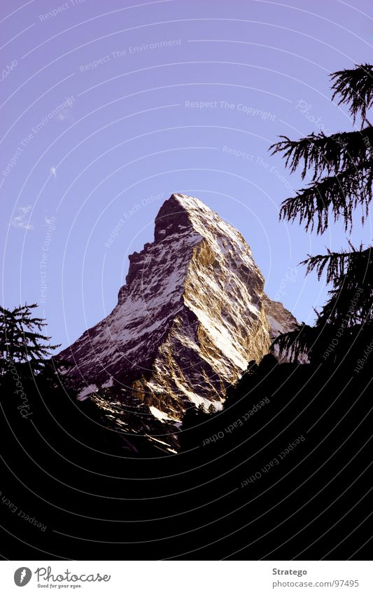 Matterhorn I Tree Fir tree Zermatt Switzerland Tourism Attraction Japanese Canton Wallis Mountaineer Landmark Summer Vacation & Travel Hiking Sublime Glacier