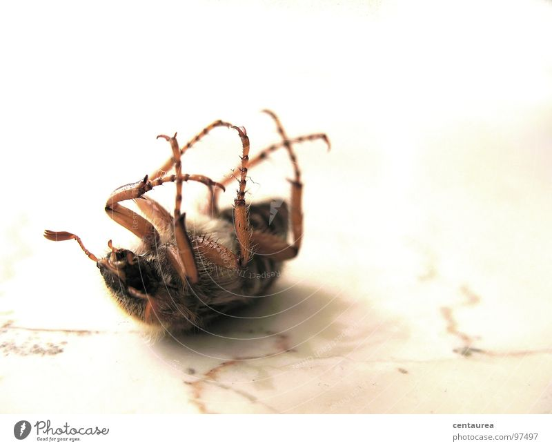 Animal Life Death Fear Back Lie Insect Beetle Feeler Crawl Dependence Transform Clumsy Subordinate Powerless