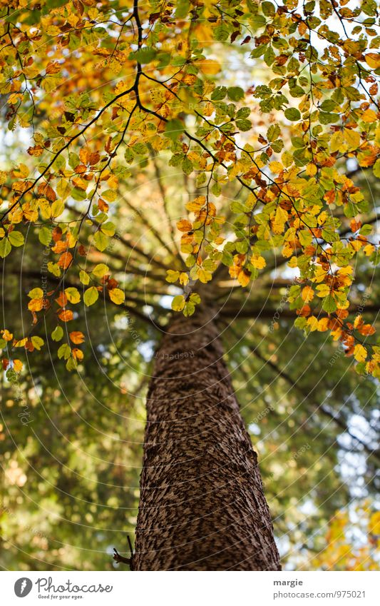 Canopy of a tree in autumn Environment Nature Plant Animal Autumn Tree Leaf Foliage plant Forest Growth Yellow Gold Green Protection Romance Hope Sadness