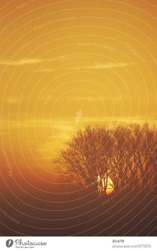 Morning fog, sunrise Nature Landscape Fire Sky Clouds Sun Sunrise Sunset Sunlight Autumn Beautiful weather Fog Tree Silhouette Branch Field Forest Illuminate
