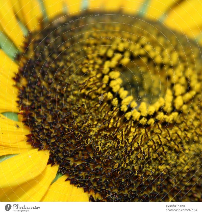 Flower Green Summer Joy Yellow Garden Happy Brown Near Things Sunflower