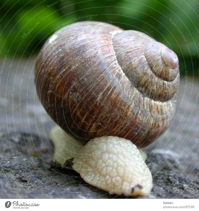 Vacation & Travel House (Residential Structure) Hiking Transport Hind quarters Mobility Mammal Snail Backwards Slowly Mobile home Stern Snail shell