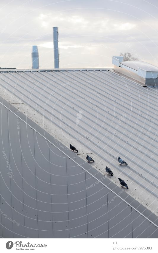 Sky Clouds Animal Environment Building Group of animals Roof Factory Chimney Pigeon Industrial plant