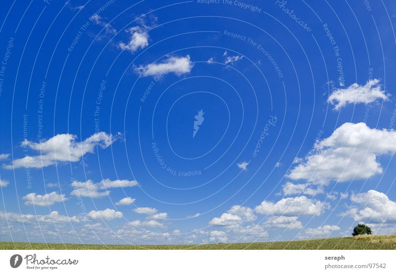 Fields Background picture Agriculture Meadow Sky Clouds Lawn Nature Landscape Freedom Far-off places Grain Horizon Minimalistic Tree Natural Rural