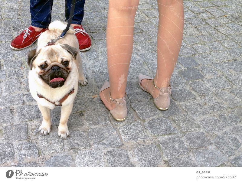 Dog Human being Red Animal Environment Street Feminine Funny Style Stone Feet Fashion Masculine Design Authentic Stand