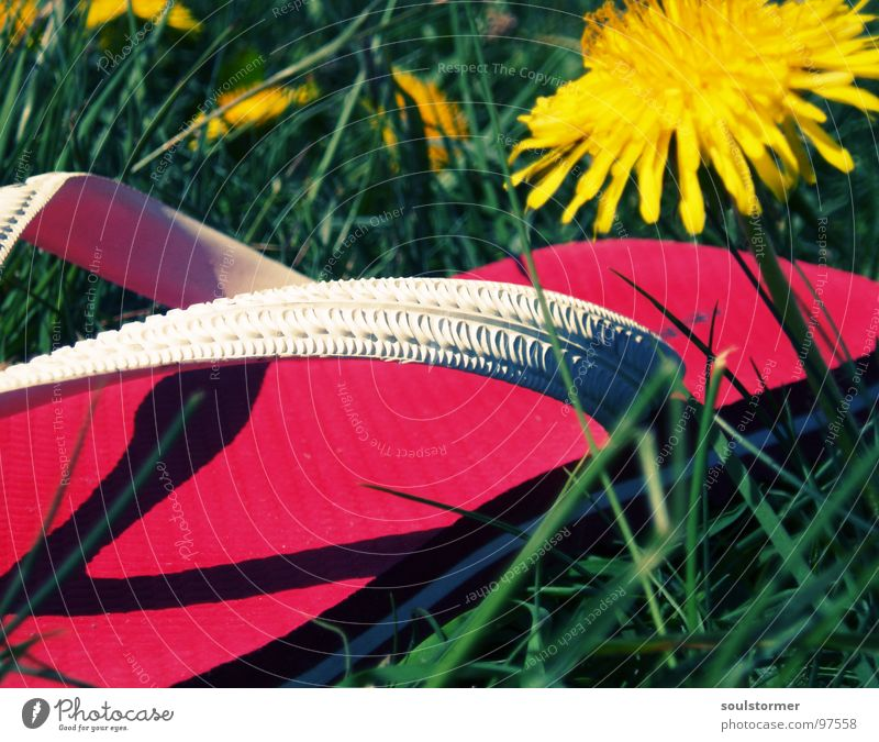 just goofing around... Flip-flops Footwear Sandal Yellow Green Red Dandelion Spring Meadow Grass Relaxation Break Rest Flower Plant Going Stand Under Calm