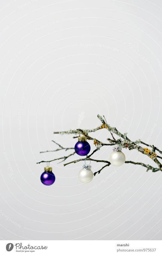 hang out till Christmas Sign Moody Christmas & Advent Branch Autumnal Decoration Glitter Ball Christmas tree Isolated Image Colour photo Interior shot