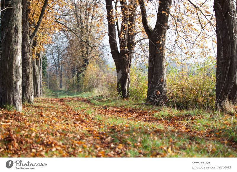 autumn Vacation & Travel Trip Freedom Environment Nature Landscape Plant Cloudless sky Autumn Climate Weather Beautiful weather Garden Park Meadow Forest