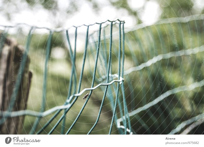 Fence with guest Animal Fly Insect Mosquitos 1 Wire Wire fence Wire netting fence Metal Network Reticular Sit Wait Broken Green Turquoise Bend Slack Flexible