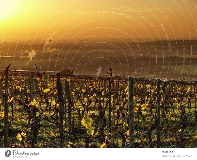 Sun Leaf Autumn Moody Gold Vine Smoke Rhineland-Palatinate Cute Rhine Wake up Alert Vineyard Grape harvest Celestial bodies and the universe Arise