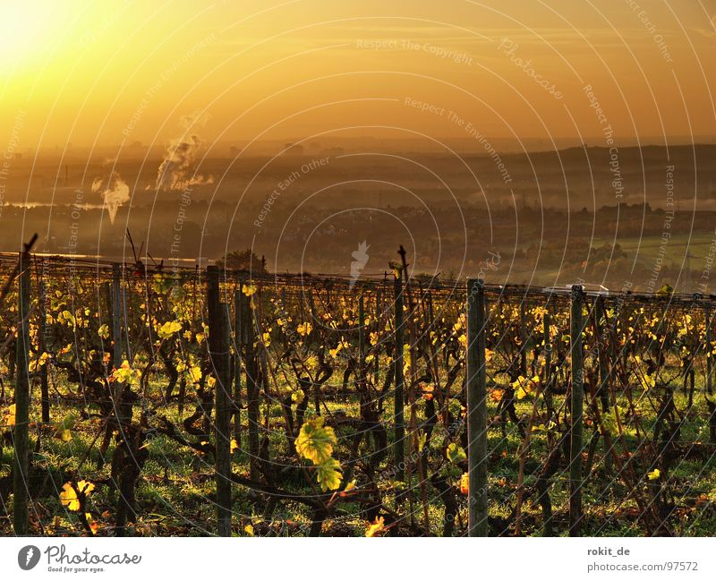 Sun Leaf Autumn Moody Gold Vine Smoke Rhineland-Palatinate Cute Wake up Alert Vineyard Grape harvest Celestial bodies and the universe Arise