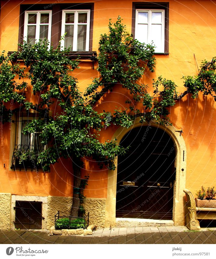 tree house Tree House (Residential Structure) Rothenburg Growth Window Entrance Slope Cobblestones Green Cellar window Sightseeing Tourist Consolidate Together