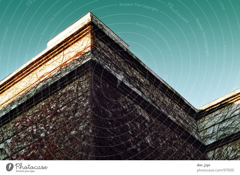 Life Corner Roof House (Residential Structure) Art Munich Plant Tendril Moody Culture Zigzag Go up Euphoria Detail up and down house of art Stone Sky Line