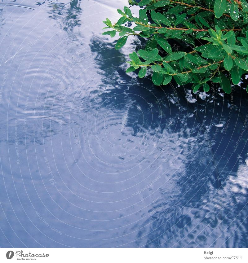 Water Green Blue Plant Summer Leaf Garden Park Rain Drops of water Wet Circle To fall Stalk Part Thunder and lightning