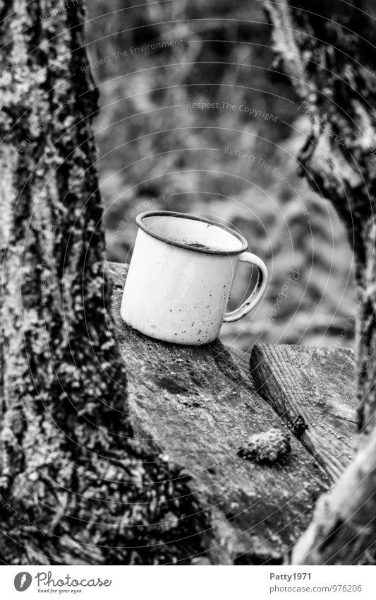 Old Plant Tree Loneliness Wood Dirty Transience Decline Cup Tree bark Forget Mug Enamel