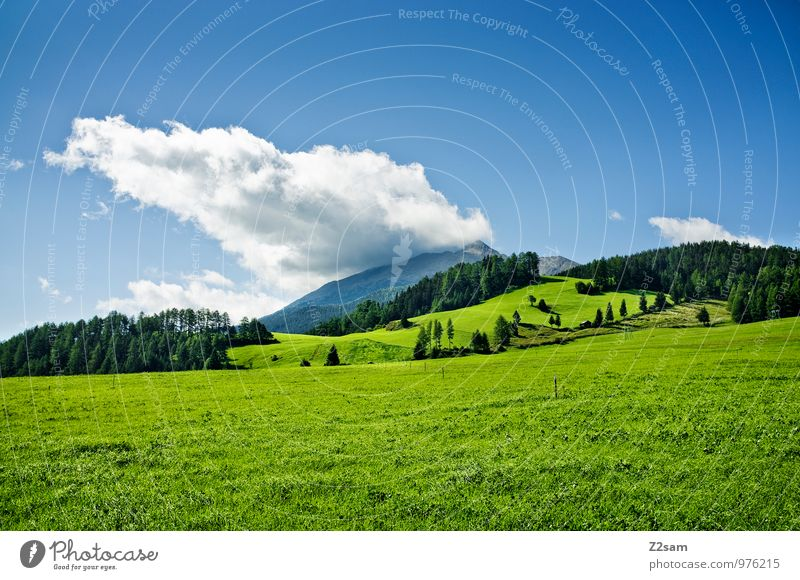 Sky Nature Blue Green Summer Landscape Calm Clouds Forest Environment Mountain Meadow Grass Natural Bushes Esthetic