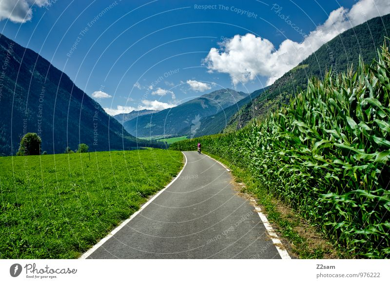 Etsch cycle path Environment Nature Landscape Sky Clouds Summer Beautiful weather Bushes Alps Mountain Traffic infrastructure Cycling Cycle path Relaxation