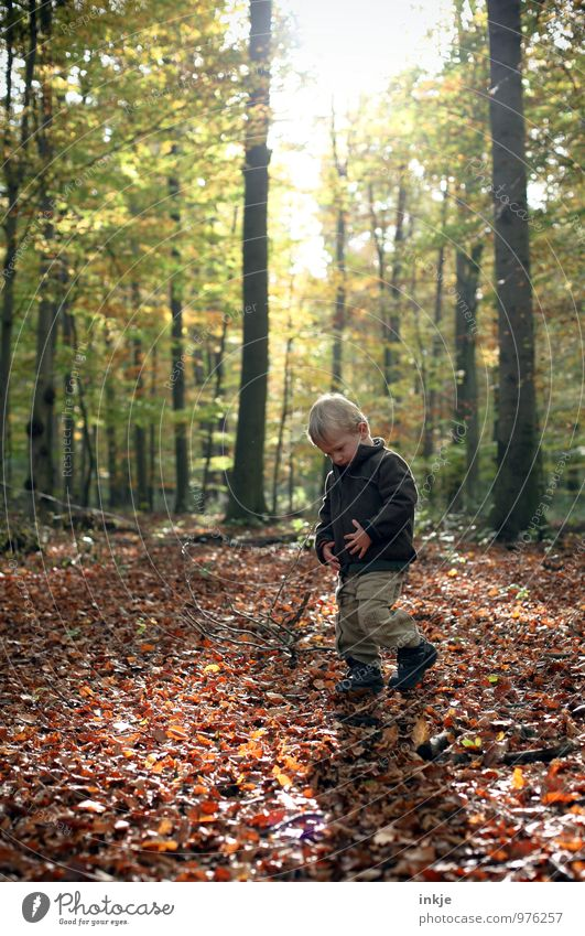 walk in the woods Senses Calm Leisure and hobbies Trip Hiking To go for a walk Nature Sun Sunlight Autumn Beautiful weather Tree Deciduous forest Leaf