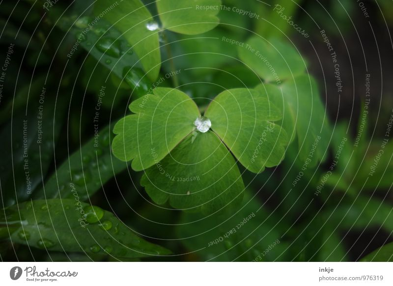 rainwater Drops of water Spring Summer Rain Plant Leaf Wet Round Green Deep green Dew Hydrophobic Middle Individual Colour photo Exterior shot Close-up