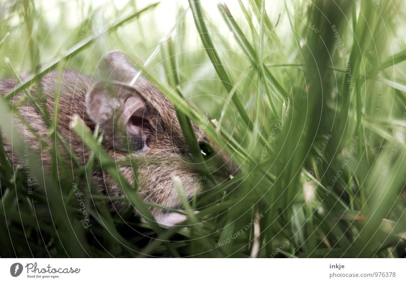 Mice 2 Spring Summer Autumn Grass Meadow Animal Wild animal Mouse 1 Crouch Authentic Small Near Cute Brown Green Protection Nature Hidden Hide Hiding place