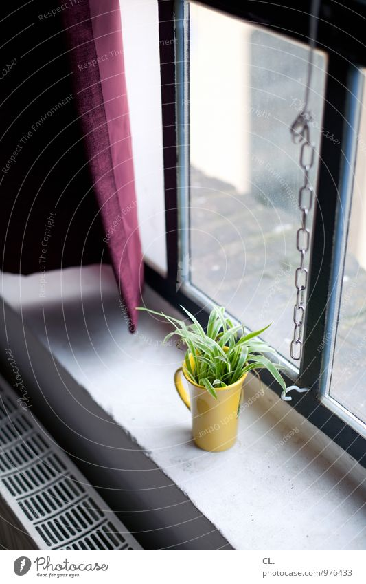 At the window Living or residing Flat (apartment) Decoration Room Plant Wall (barrier) Wall (building) Window Heating Heater Flower vase Mug Window board Chain