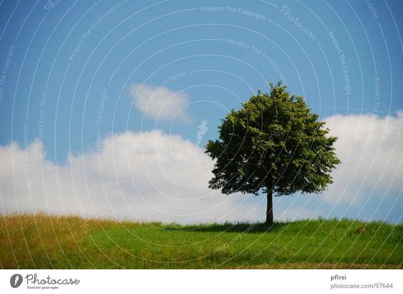 Nature Beautiful Sky White Tree Green Blue Summer Leaf Clouds Loneliness Meadow Spring Lighting Field Weather