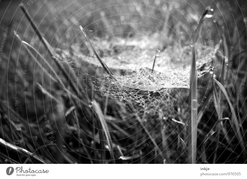 Nature Plant Summer Autumn Grass Natural Drops of water Observe Network Attachment Hang Dew Easy Trap