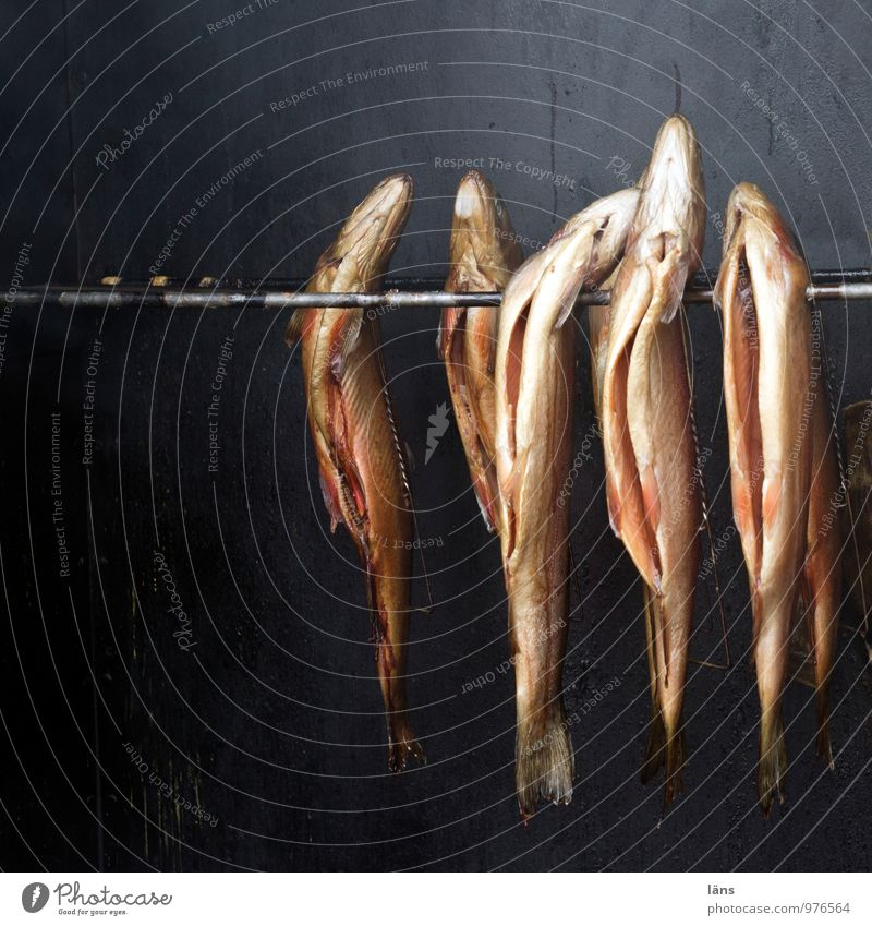 Lanes & trails Death Food Together Nutrition Group of animals Transience Change Fish Attachment Fragrance Hang Captured Fishery Conserve