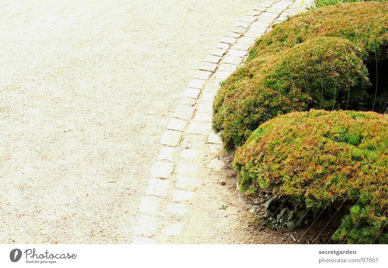 Nature White Green Plant Summer Joy Relaxation Garden Sand Lanes & trails Park Bright Art Bushes Round Culture
